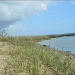 University of Central Florida's Living Shoreline Project