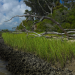 Jones Island Phase I, II