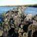 Sweetwater Property, Galveston Island
